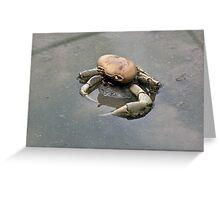Crab Remains 2 - Graeme Hall Nature Sanctuary, Barbados Greeting Card
