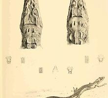 The Reptiles of British India by Albert C L G Gunther 1864 0495 Crocodilus Palustris, Siamensis, Tachydromus Sex lineatus, Meridionalis, Septentrionalis Crocodile by wetdryvac