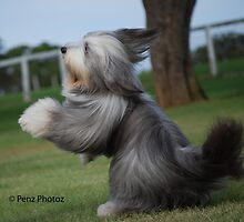Its a dogs life!  BJ - Bounces for Joy by Penny Brooks