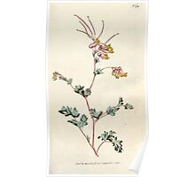 The Botanical magazine, or, Flower garden displayed by William Curtis V5 v6 1792 1793 0072 Fumaria Glauca, Glaucous Fumitory Poster