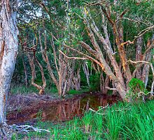 Paperbark Trees by Terry Everson