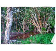Paperbark Trees Poster