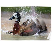 Bathing Duck - Graeme Hall nature Sanctuary, Barbados  Poster
