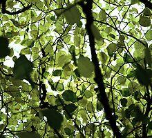 Nature's Hue by rickvohra