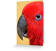 Eucalyptus Parrot Female - Graeme Hall Nature Sanctuary, Barbados Greeting Card