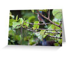 Green Heron on the Hunt - Graeme Hall Nature Sanctuary, Barbados Greeting Card