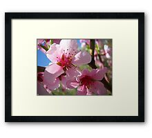 Blooms and Blossoms.Peach. Framed Print