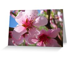 Blooms and Blossoms.Peach. Greeting Card