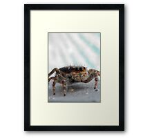 ©NS A Spider Life XXXIX You Again And Close IA. Framed Print