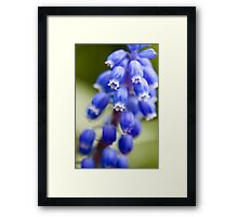 Blue Bells Framed Print