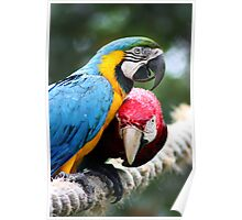 Red and Blue Macaws - Graeme Hall Nature Sanctuary, Barbados Poster