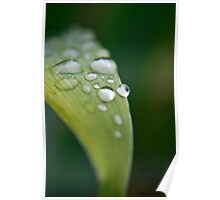 Raindrops on Iris Leaf Poster