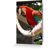 Red and Green Macaw - Graeme Hall Nature Sanctuary, Barbados Greeting Card