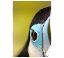 Tucan Eye - Graeme Hall Nature Sanctuary, Barbados Poster