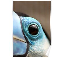 Tucan Eye 2 - Graeme Hall Nature Sanctuary, Barbados  Poster
