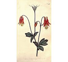 The Botanical magazine, or, Flower garden displayed by William Curtis V7 V8 1794 0062 Aquilegia Canadensis, Canadian Columbine Photographic Print