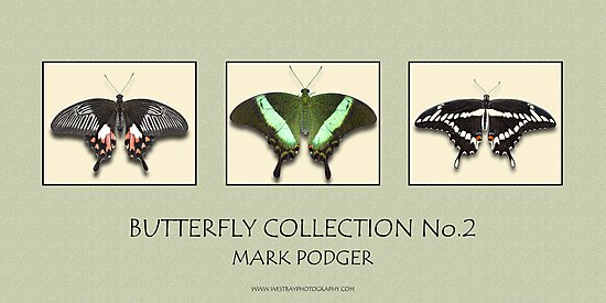 Butterfly Horizontal Collection 2 - Print by Mark Podger