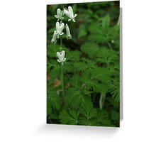Spring Wildflower Squirrel Corn Greeting Card