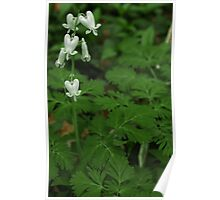 Spring Wildflower Squirrel Corn Poster