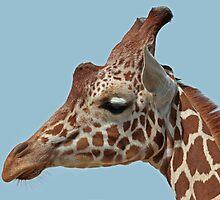 Giraffe Portrait by Robert Abraham