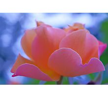 lovely pink rose flower photo art. Photographic Print