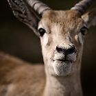 Oh Deer! by shutterjunkie