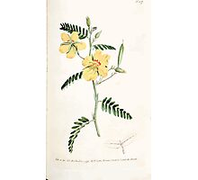 The Botanical magazine, or, Flower garden displayed by William Curtis V3 V4 1790 1791 0072 Cassia Chamaecrista, Dwarf Cassia Photographic Print