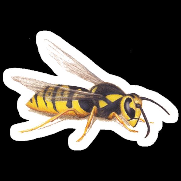 The Wasp by Lars Furtwaengler