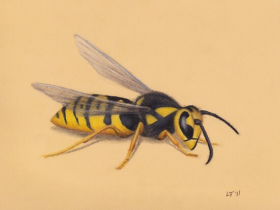 The Wasp by Lars Furtwaengler