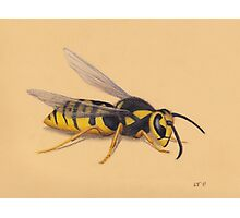 The Wasp Photographic Print