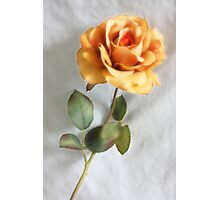Peach Rose Photographic Print