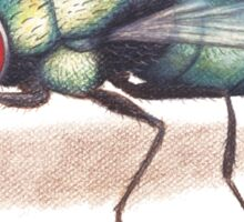 The Fly Sticker
