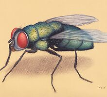 The Fly by Lars Furtwaengler