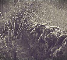 The Old Wall of Burford by Nicola jayne