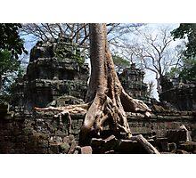 Big Tree Photographic Print