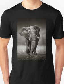 Elephant approach from front T-Shirt