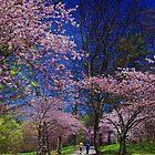 Sakura in High Park by JD Dorosiewicz