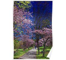 Sakura in High Park Poster