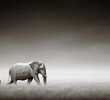 Elephant with zebra by johanswanepoel