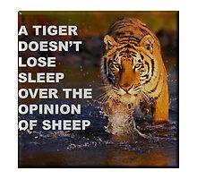 The Tiger Loses No Sleep by lawrencebaird