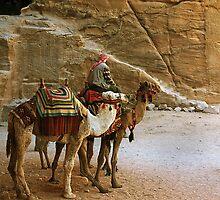 Camel Driver Petra, Jordan by R Hawkins