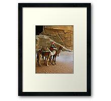Camel Driver Petra, Jordan Framed Print