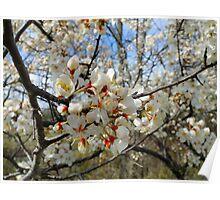 Apple Blossom Bokeh Poster