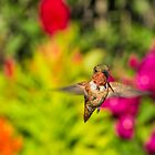 Burst Of Color by Mike Herdering