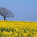 Study in Blue and Yellow, Lincolnshire by Mark Lancaster