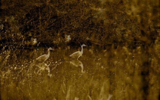Heron Waits by Richard Pitman