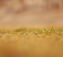 Grass by Antti Andersson