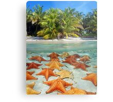 Beach with palm trees and starfish underwater Metal Print