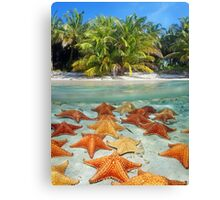 Beach with palm trees and starfish underwater Canvas Print