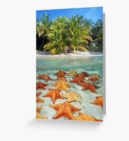 Beach with palm trees and starfish underwater Greeting Card